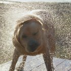 How to Eliminate the Smell of a Wet Dog