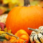 Vegetable Alternatives to Pumpkin for Cats