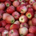 Gala apples have attractive red striping.