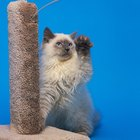 Do Cat Trees Really Help Cats Stop Clawing the Furniture?