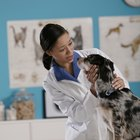What Does a Veterinarian Technician Do?