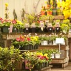 Browse nurseries often to find seasonal favorites.