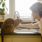 How to Prevent Kidney Stones in Cats