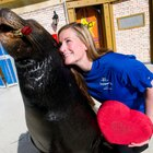 Marine Mammal Training Job Description