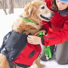 Weighted Vests for Dogs