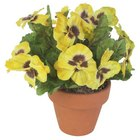 The flowers and leaves of the pansy are edible and high in vitamins A and C.