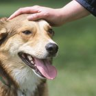 What Causes a Dog to Cry & Growl When Someone Pets Them?