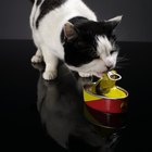 Diet for Urate Bladder Stones in Cats