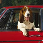 The Best Ways to Put Your Dog in Your Car
