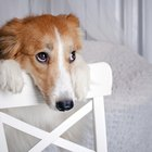 How to Calm a Skittish Barking Dog