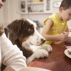 All-Natural Dog Food Recipes