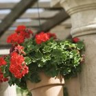 Hanging baskets can add a splash of color.