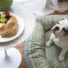 Guidelines to Feed an American Bulldog