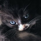 When Should a Kitten Born to a Feral Mother Cat Be Weaned?