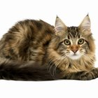 How to Naturally Get Rid of Rodent Ulcers in Cats