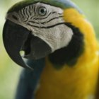 What Are the Causes of Diarrhea in Parrots?