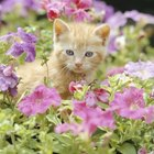 Are Marigolds Toxic to Cats?