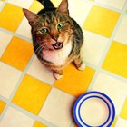 What Does It Mean When Cats Scratch the Floor Next to Their Food Bowl?