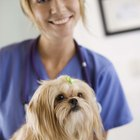 Facts About Veterinarian Assistants