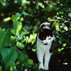 What Can Be Put on Shrubs to Keep Outdoor Cats From Urinating?