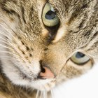 Why a Cat's Pupils Get Big