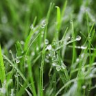 Wet grass can mold and leave a strong smell on the mower.