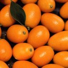 Kumquats are usually eaten whole, with the rind on.