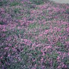 Groundcovers prevent damage from run-off.