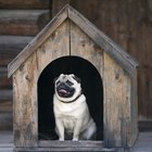 How to Observe Animals in Boarding Kennels