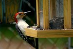 How To Keep Woodpeckers Away From Wood Siding Ehow