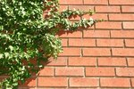 How To Remove Ivy From Vinyl Siding On A House Ehow