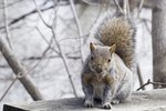 How To Stop Squirrels From Gnawing On A Log Home Ehow