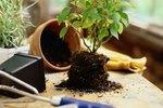 tiny-flying-bugs-house-plants-800x800 Tiny Flies Around Houseplants on