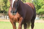 Can You Give Dogs Horse Wormer