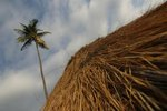 Palm Frond Weaving Instructions Ehow