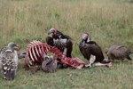 Ways To Scare Buzzards Ehow