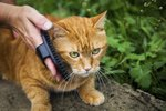 How To Fix Matted Hair On An Old Cat Ehow