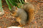 What Can I Do To Stop Squirrels Chewing Plastic Shutters Ehow