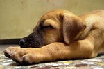 Best Food For Dogs With Exocrine Pancreatic Insufficiency