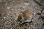 How To Get Rid Of A Mouse Droppings Smell Ehow