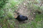 Do Rats Dig Holes In The Ground Ehow