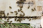 How To Kill Carpenter Bees Amp Wasps Ehow