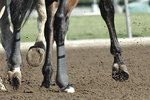What Are the Treatments for Equine Flat Feet?