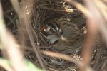 How to Protect Bird Nests From Predators