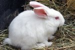 What Causes Milky Urine in Rabbits?