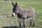 What Are the Treatments for Flies on Donkeys?