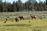 Hotels Outside Yellowstone National Park Usa Today