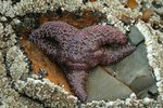 About Purple Starfish