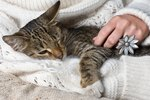 Homemade Skin Care for Cats
