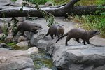 Life Span of River Otters